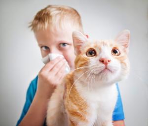От постоянного воздействия раздражителя страдает иммунная и нервная система
