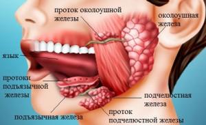 Опухоли, поражающие слюнные железы, могут быть добро- или злокачественными