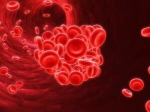 Витамин В12 играет важную роль в формировании составных частей крови