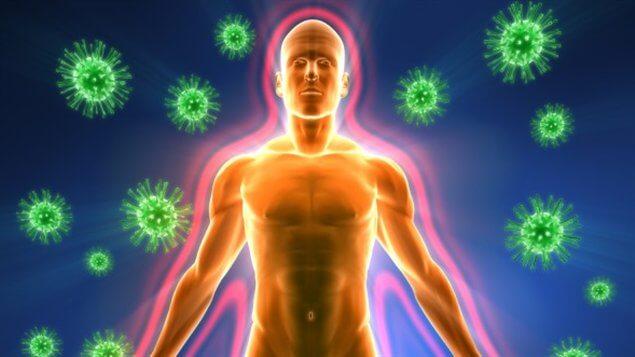 Травы для поднятия иммунитета: лучшие растительные средства