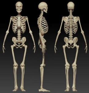 Одна из функций скелета - опорная