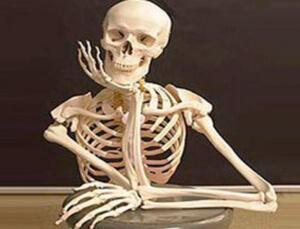 Скелет состоит из 206 костей, многие из которых являются парными