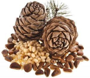 Кедровые орешки: полезные свойства ценного продукта
