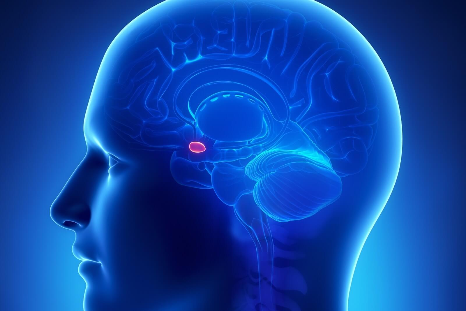 Микроаденома гипофиза: последствия патологии для здоровья человека