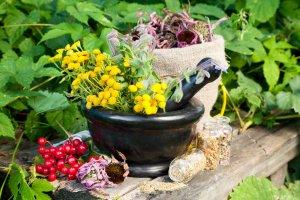 Народная аптека: растения, которые лечат человека