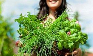 Какая самая эффективная трава для похудения: отвечаем на вопрос