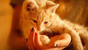 Причины развития болезни у котят