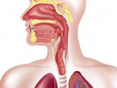Дивертикул пищевода: симптомы, виды заболевания и диагностика