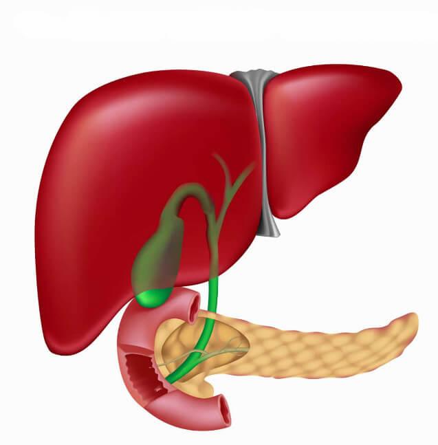 Утолщение стенок желчного пузыря: почему возникает и какие симптомы имеет